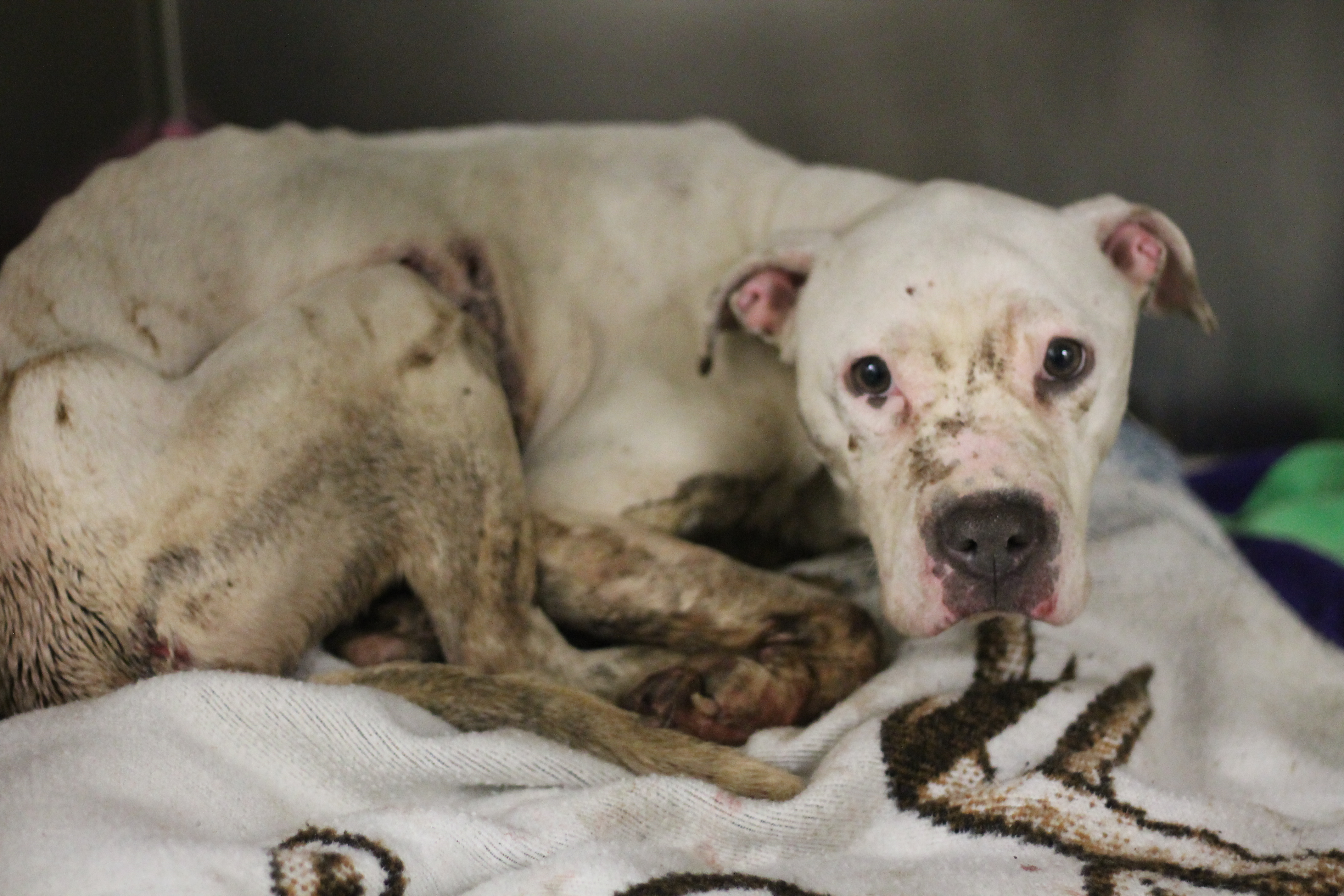 Donate to animals like woobie pennsylvania society for the donate to animals like woobie fandeluxe Image collections