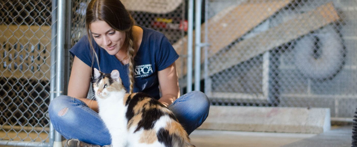 Behavior Coordinator, Kayla, works on socializing our Working Cats