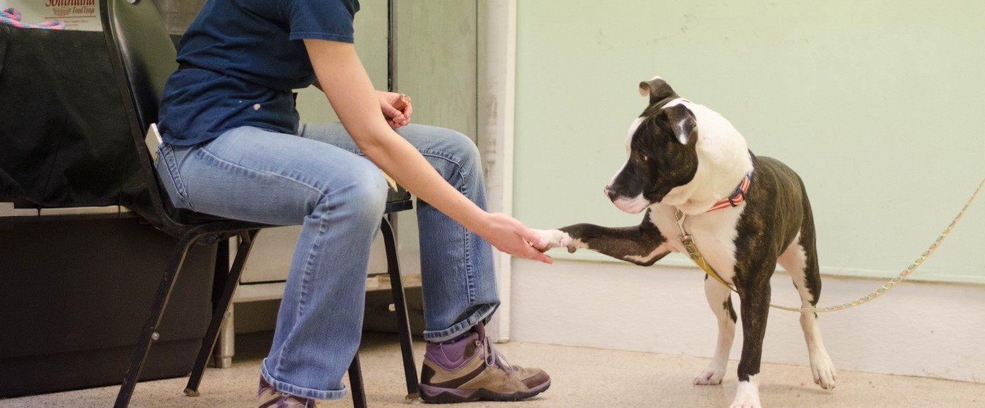 "Behavior Coordinator, Vic, works with dog, ""Turk,"" on commands"