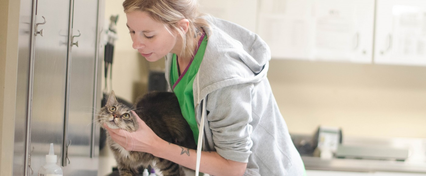 Vet tech examines cat
