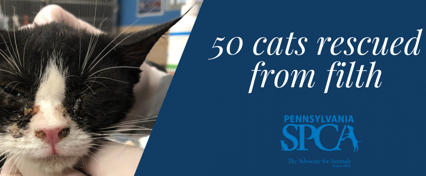 PSPCA's Humane Law Enforcement team rescues cats in need