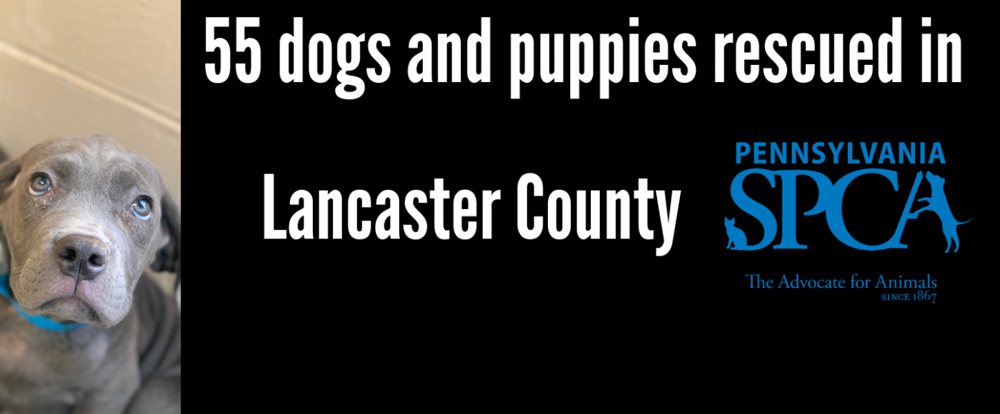 PSPCA rescues 55 dogs